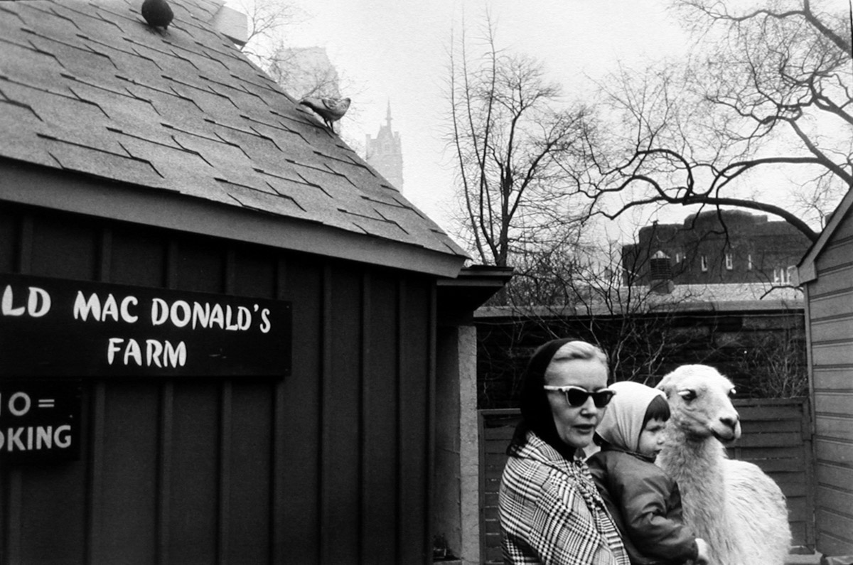Image result for garry winogrand the animals